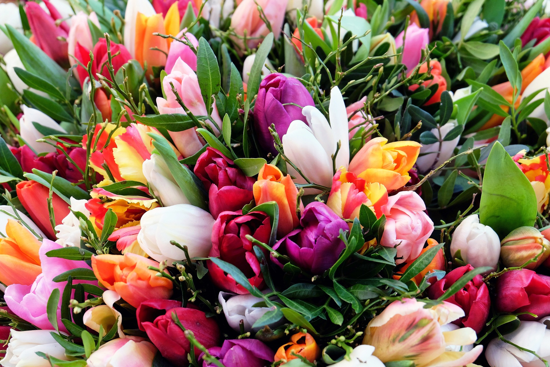 plant flower petal bloom tulip colorful flora tulip bouquet flowers tulips floristry spring flowers flowering plant flower bouquet floral design land plant flower arranging 1292082